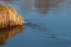 蓝天的反射在一条小河的用被解冻的水在春天日落的4月森林 图库摄影