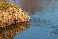 蓝天的反射在一条小河的用被解冻的水在春天日落的4月森林 库存照片