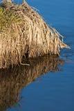 蓝天的反射在一条小河的用被解冻的水在春天日落的4月森林 免版税库存照片