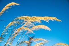 蓝天的植物 免版税库存图片