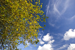 蓝天的生动的秋天树梢 免版税库存图片
