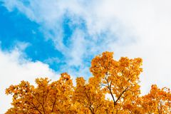 蓝天的秋叶 框架 免版税库存图片