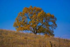 蓝天的秋天结构树 免版税库存图片