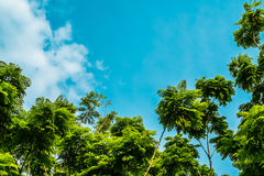 蓝天的结构树 库存照片