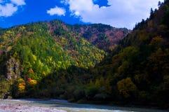 蓝天的colorized树丛 图库摄影