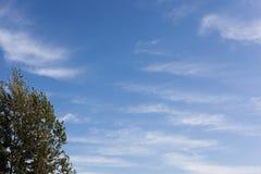 蓝天结构树 免版税库存照片