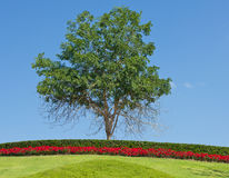 蓝天结构树 免版税库存图片