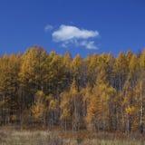 蓝天结构树 免版税图库摄影