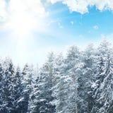 蓝天背景的斯诺伊森林  33c 1月横向俄国温度ural冬天 库存图片