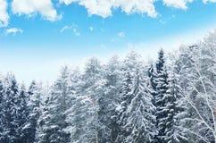 蓝天背景的斯诺伊森林  33c 1月横向俄国温度ural冬天 图库摄影