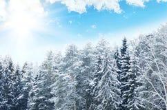 蓝天背景的斯诺伊森林  33c 1月横向俄国温度ural冬天 免版税库存图片