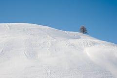 蓝天雪结构树冬天 免版税库存照片