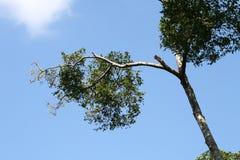 蓝天顶层结构树 免版税库存图片