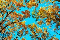 蓝天顶层结构树 库存图片
