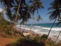 蓝天,棕榈树,沙子,波浪,海 免版税库存图片
