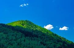 蓝天,白色云彩,绿色阿尔泰山在中午 免版税图库摄影