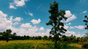 蓝天ang绿色树 免版税库存图片