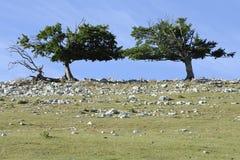 蓝天surraounding的结构树 免版税库存照片