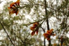 蓝山山脉国家公园悉尼澳大利亚 图库摄影