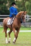 从蓝星骑马女鞍的一名妇女 库存图片