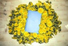 蓝皮书说谎在一张木桌上的黄色蒲公英 库存图片