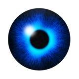 蓝眼睛学生 库存图片