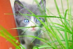 蓝眼睛的逗人喜爱的小猫在自然环境里 免版税库存图片