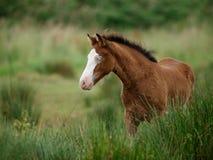 蓝眼睛的马 免版税库存照片
