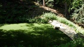 蓝细菌或`青绿色`海藻 沼泽和沼泽地 影视素材