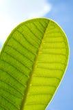 蓝绿色叶子零件天空 库存照片