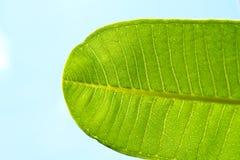 蓝绿色叶子零件天空 免版税库存照片