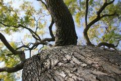 蓝绿色天空结构树 免版税图库摄影