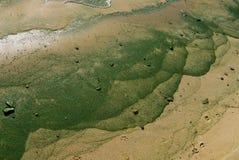 蓝绿色海藻 免版税库存照片