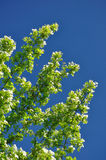 蓝绿色留下天空 免版税图库摄影