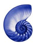 蓝色一半查出的nautilis 库存图片