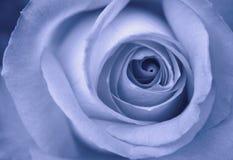 蓝色上升了 免版税库存照片