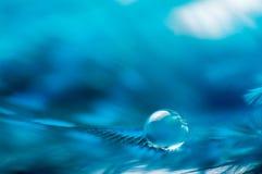 蓝色与一宏观露水水下落,美好的自然本底的颜色蓬松羽毛的一个抽象图象 免版税库存图片
