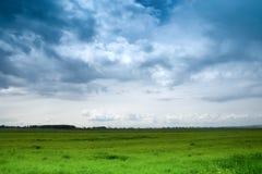 蓝色严重的绿色草甸天空 库存照片