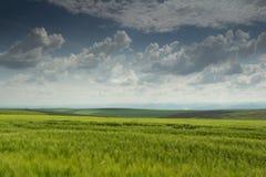 蓝色云彩调遣绿色天空麦子 库存照片