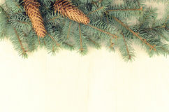蓝色云杉和锥体分支在木背景 库存图片