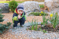 蓝色云杉和黄水仙的小男孩 库存照片
