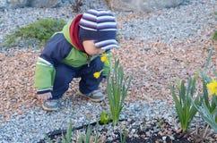 蓝色云杉和黄水仙的小男孩 免版税库存图片