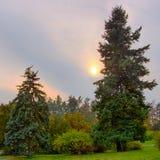 蓝色云杉在秋天公园 库存照片