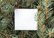 蓝色云杉的枝杈 免版税库存照片