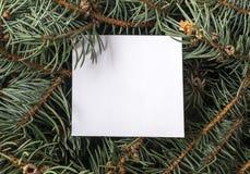 蓝色云杉的枝杈 库存照片