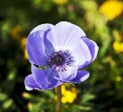 蓝色五颜六色的花 库存照片