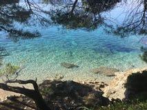 蓝色亚得里亚海的树荫  免版税图库摄影