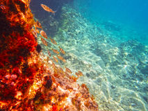蓝色亚得里亚海的水下的看法 免版税库存照片