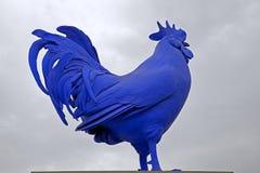 蓝色公鸡 库存照片