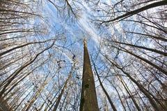 蓝色冠天空结构树 库存图片